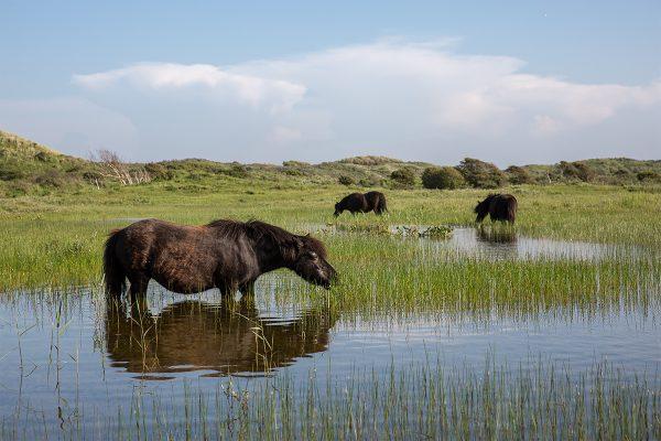Mitigated Ponies