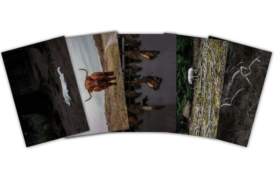 Preparated Nature Postcards